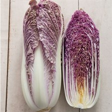 Cabbage Red Dragon   20 seeds