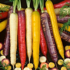 Carrot    Rainbow Carrot      40 Seeds