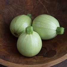 Squash Round shape  Desi Selected  Seeds