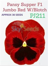 Pansy Supper F1 Jumbo Red w  blotch