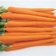 Carrot Sugarsnax 54  40 seeds