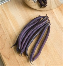 BEANS VELOUR FILET F1 20 seeds