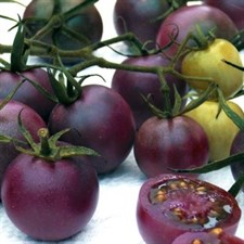 Tomato Seed purple Round 10 Seeds