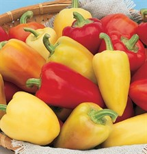 Pepper Seed Antohi Romanian 20 seeds