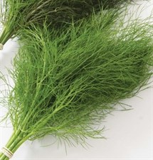 Fennel Leaf  Seed