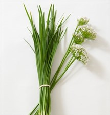 Garlic Chives Chinese Leeks/ Organic Seed