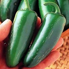 Pepper  Jalapeno F1 20 seeds