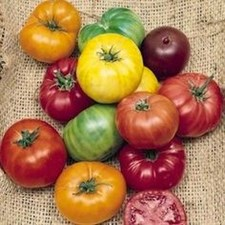 Mix Tomato Seeds Gourmet Slicing