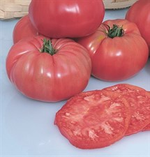 Tomato Pruden's Purple 20 seeds