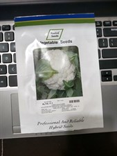 CAULIFLOWER ALTIS  F1 HYBRID 10 GM