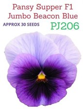 Pansy Supper F1 Jumbo Beacon Blue