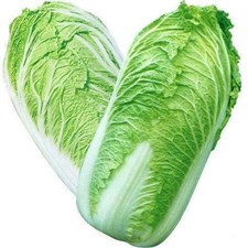 CHINESE CABBAGE  approximately 50 seeds