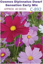 Cosmos Dipinnatus Dwarf  Sensation Early Mix