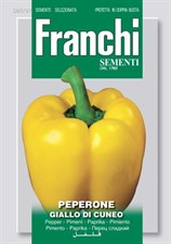 yellow Pepper Giallo Di Cuneo