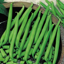 French Bean  Seeds approx 20 seeds