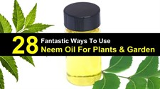 NEEM OIL  100  ML ORGANIC