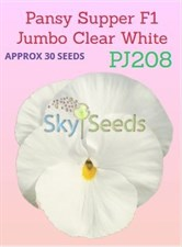 Pansy Supper F1 Jumbo Clear White