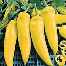 Pepper - Hungarian Yellow Wax (H)