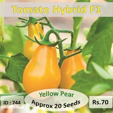 Tomato Seed Yellow Pear 20 Seeds