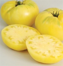 Tomato Seed Great White Organic