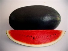 WATER MELON LONG