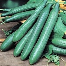 Cucumber Seedless bella F1