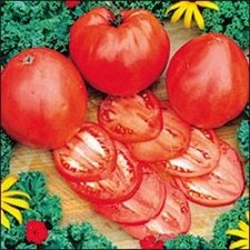 Tomato - Heirloom - Oxheart Red