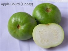 APPLE GOURD (TINDA) WHITE SON